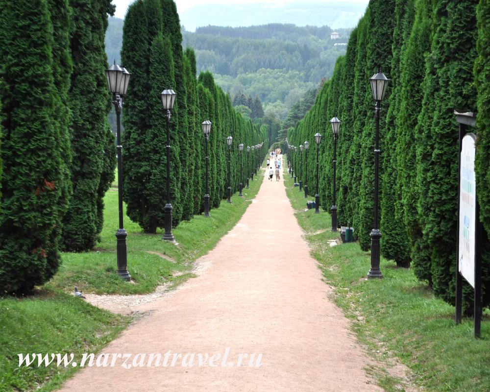 Туевая аллея в парке