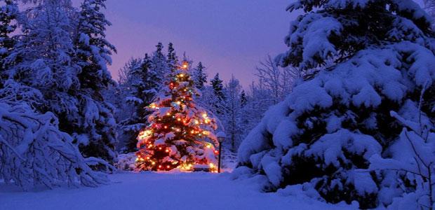 Новогоднее дерево.