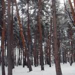Курортный парк зимой.