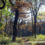 Осень. Лечебного-курортный парк. Кисловодск